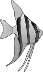 angelfish-24669_1280
