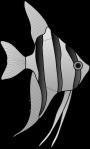 angelfish-24669_1280